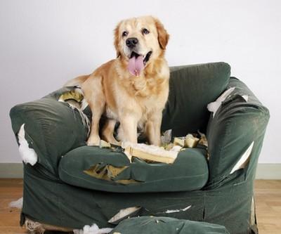 Hundehaftpflichtversicherung mit vervisio