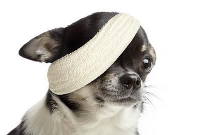 Hundekrankenversicherung Vergleich mit vervisio