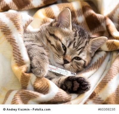 Katzenkrankenversicherung mit vervisio