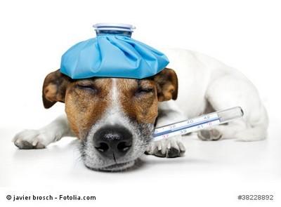 Hundekrankenversicherung zahlt Behandlung des Hundes