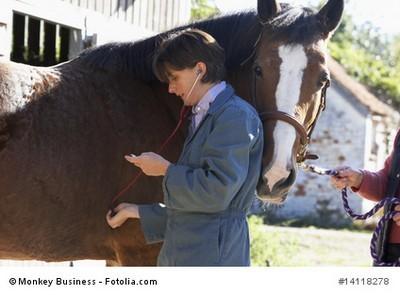 Pferdekrankenversicherung Vergleich mit vervisio