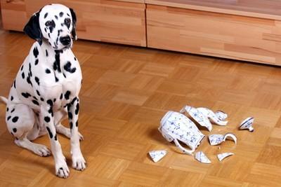 Wer zahlt einen Sachschaden veruarsacht durch einen Hund?