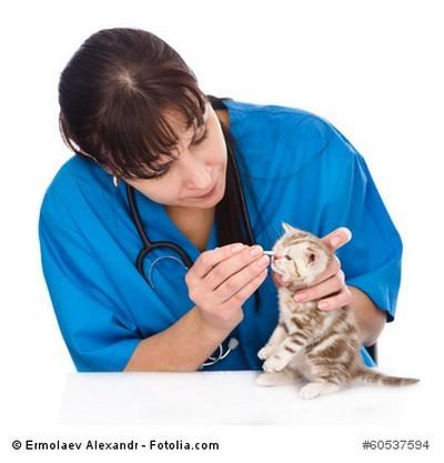 Vorsorge Untersuchung bei einer Katze